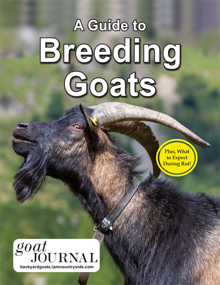 A Guide to Breeding Goats