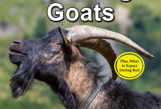 How to Prevent Foot Rot in Goats - Backyard Goats