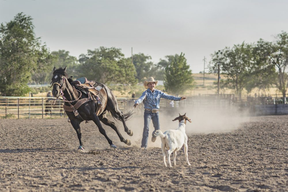 rodeo-goats