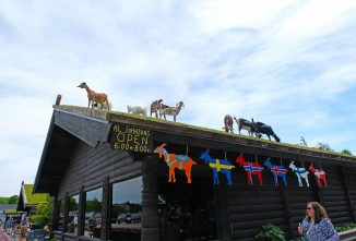 Grazing Goats on a Restaurant Roof