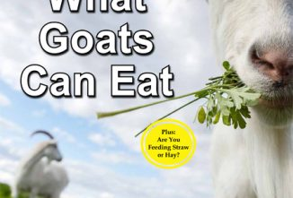 A Guide to What Goats Can Eat Flip Book