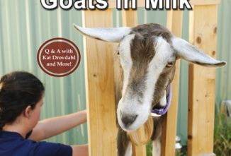 Your Guide to Buying and Keeping Goats in Milk