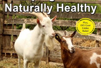 Guide to Keeping Goats Naturally Healthy
