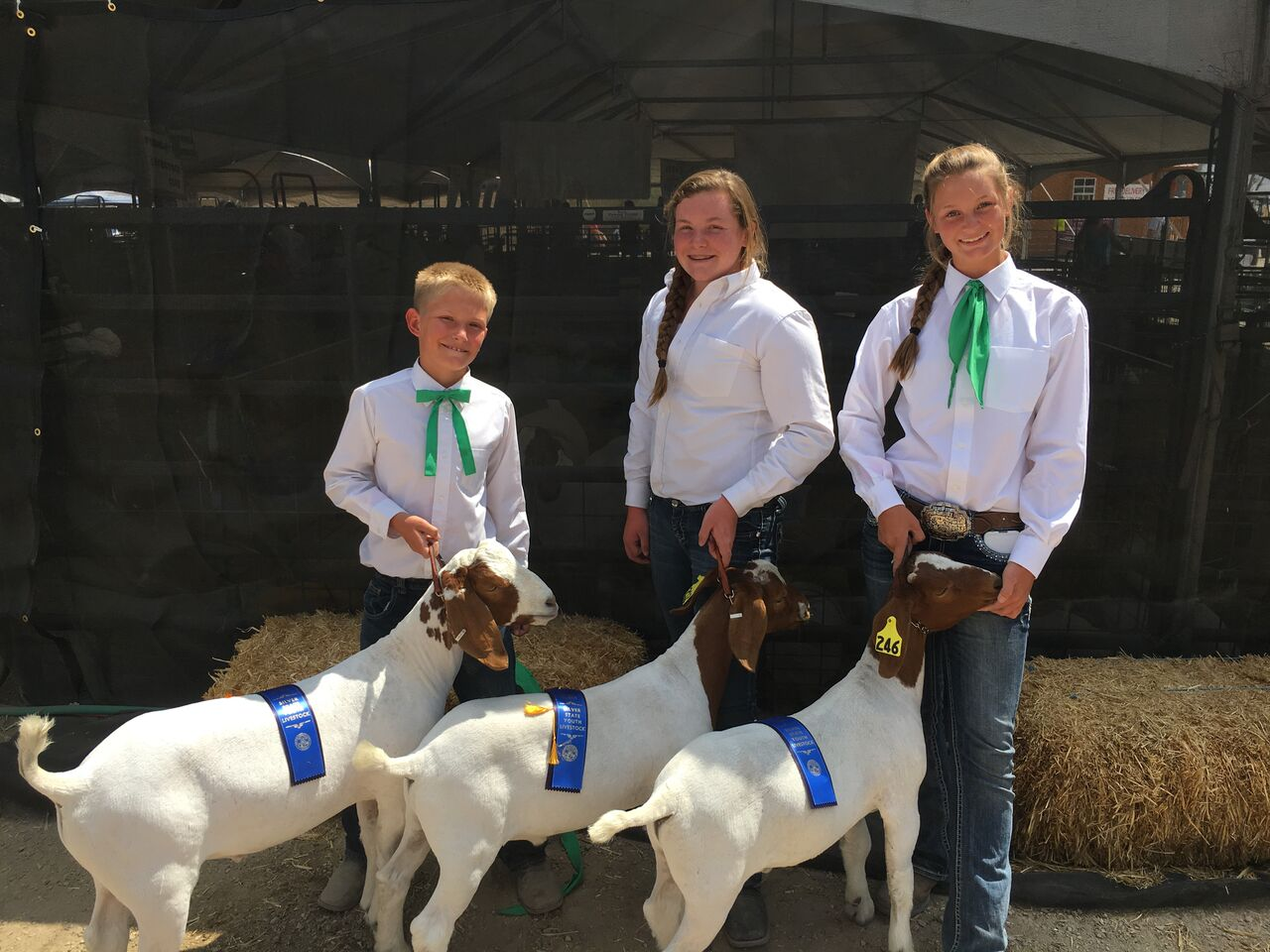 Battle Born Livestock: Kids Raising Boer Goat Kids