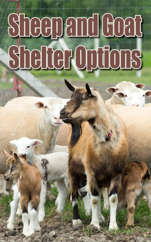 Sheep & Goats Shelters