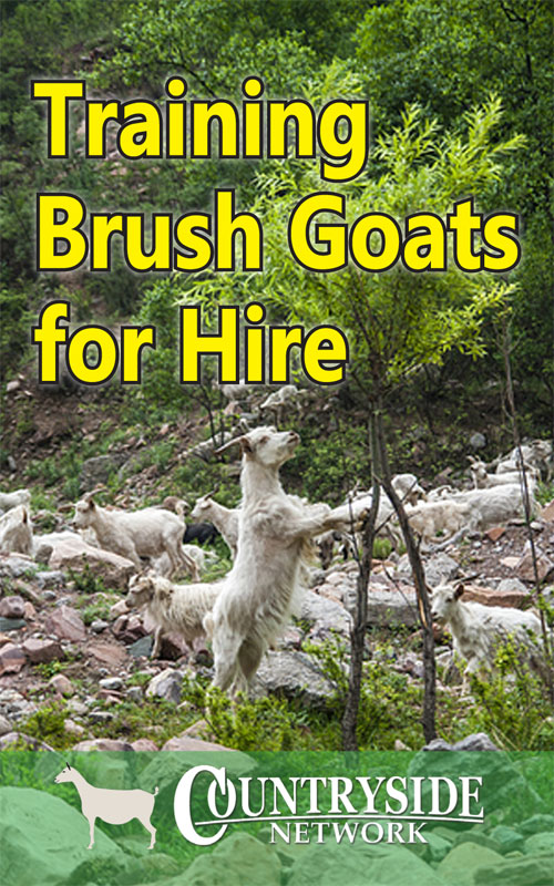 Brush Goats for Hire
