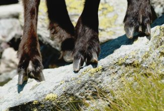 How to Prevent Foot Rot in Goats