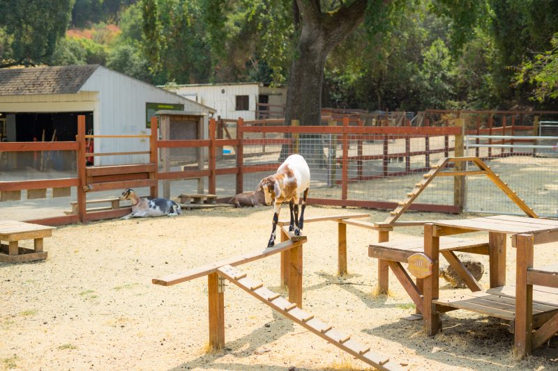 Goat Playgrounds: A Place to Play!