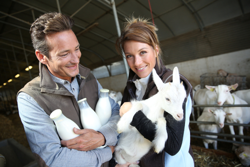 9 Things to Consider Before Raising Goats for Milk