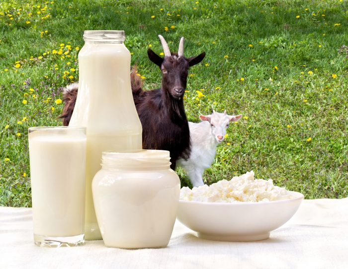 The Nutritional Benefits of Goat Milk