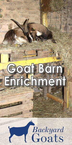 goat-barn-enrichment-essentials