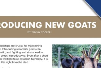 Introducing New Goats