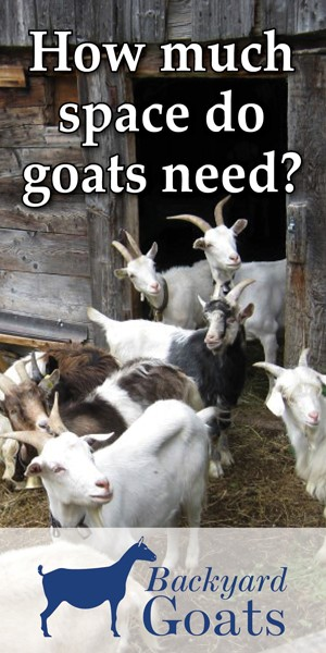 space-requirements-goats